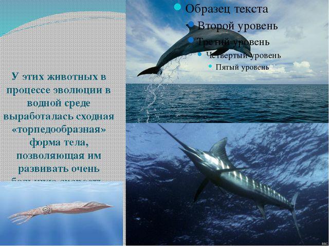 У этих животных в процессе эволюции в водной среде выработалась сходная «тор...