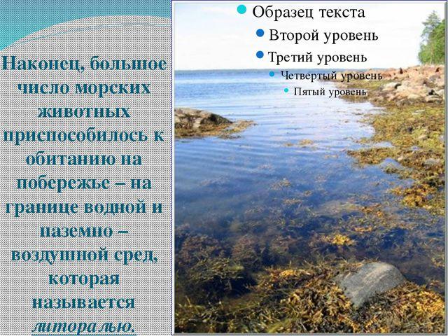 Наконец, большое число морских животных приспособилось к обитанию на побереж...