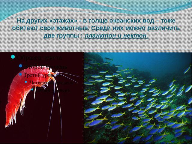 На других «этажах» - в толще океанских вод – тоже обитают свои животные. Сред...