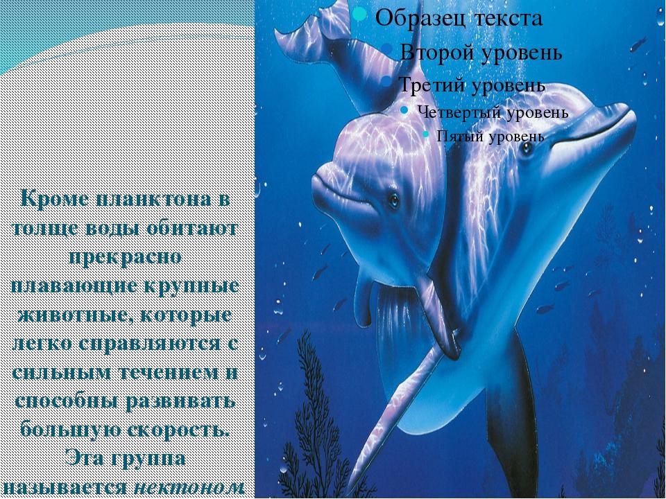 Кроме планктона в толще воды обитают прекрасно плавающие крупные животные, к...