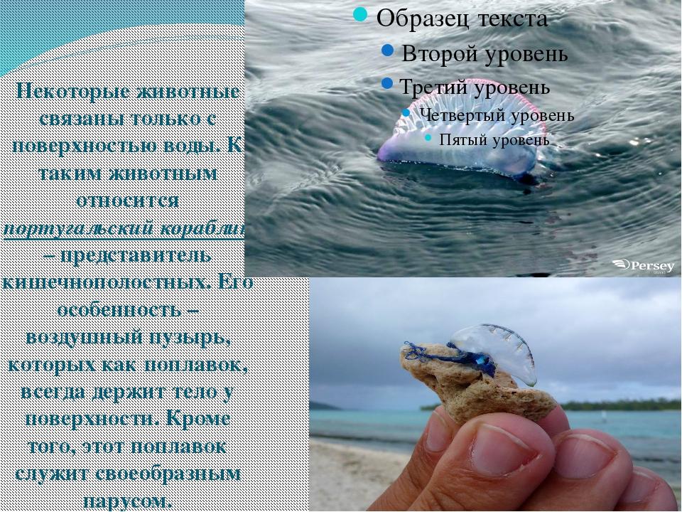 Некоторые животные связаны только с поверхностью воды. К таким животным отно...