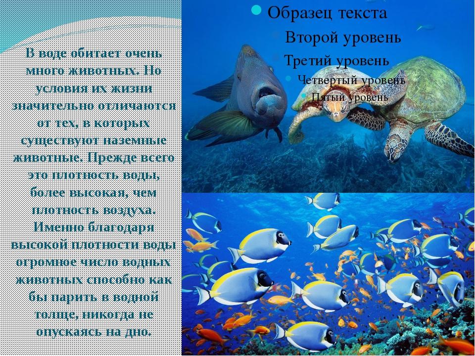 В воде обитает очень много животных. Но условия их жизни значительно отличаю...