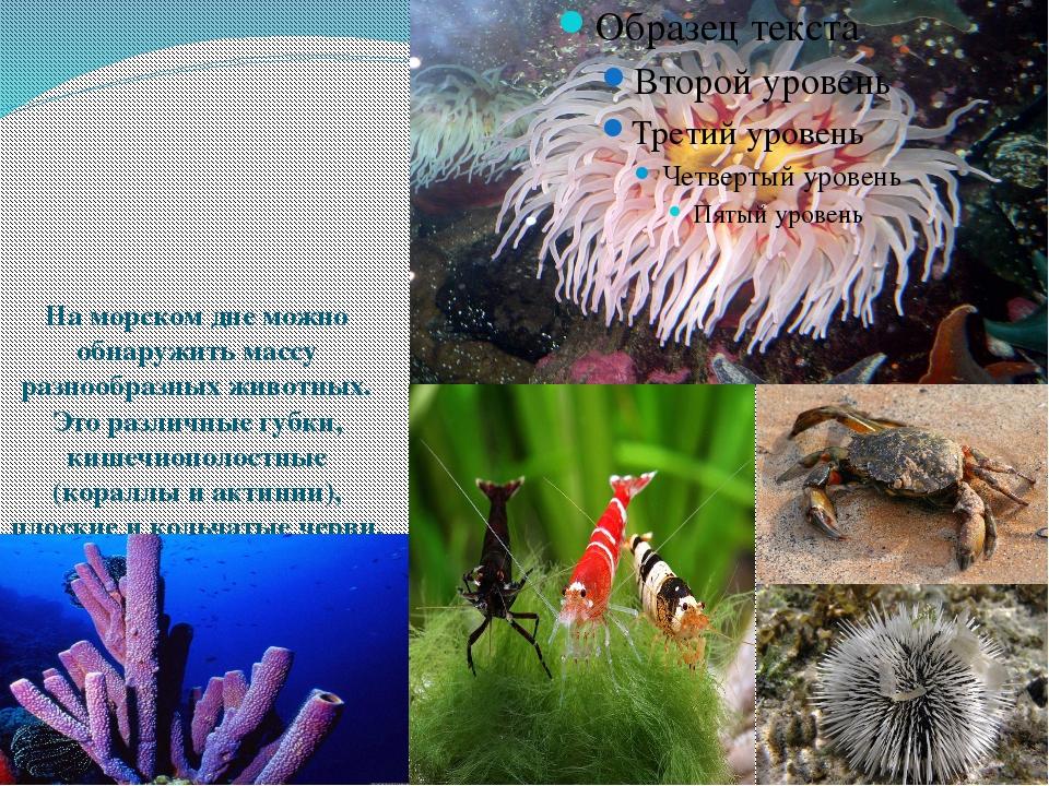 На морском дне можно обнаружить массу разнообразных животных. Это различные...
