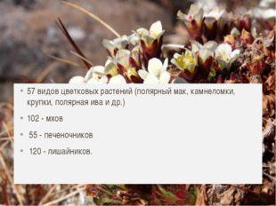 Растительный мир 57 видов цветковых растений (полярный мак, камнеломки, крупк