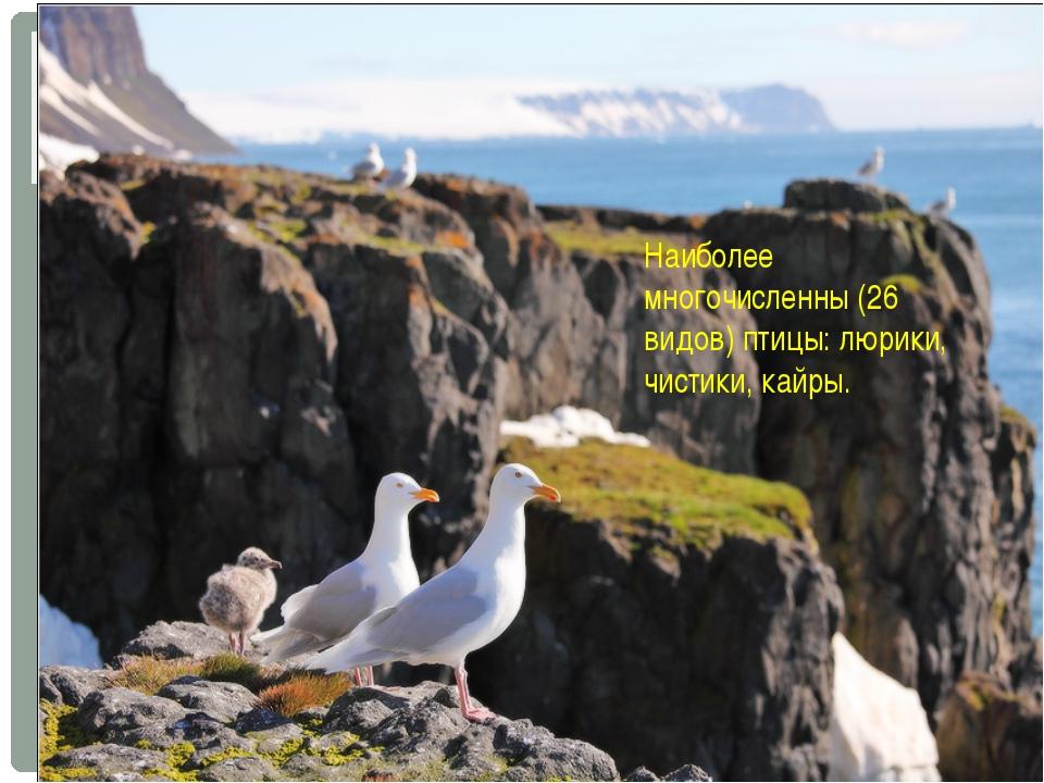Наиболее многочисленны (26 видов) птицы: люрики, чистики, кайры.