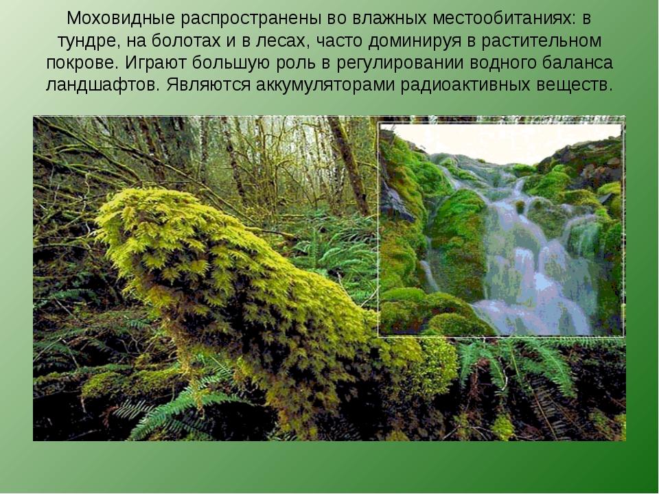 Моховидные распространены во влажных местообитаниях: в тундре, на болотах и в...