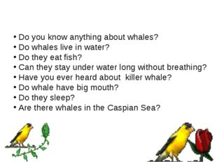 Do you know anything about whales? Do whales live in water? Do they eat fish?