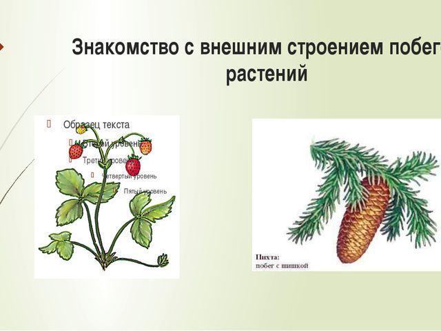 Знакомство с внешним строением побегов растений