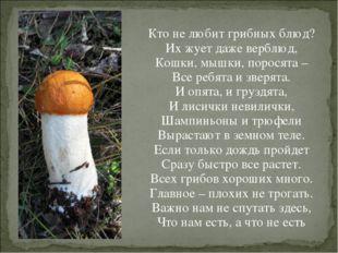 Кто не любит грибных блюд? Их жует даже верблюд, Кошки, мышки, поросята – Все