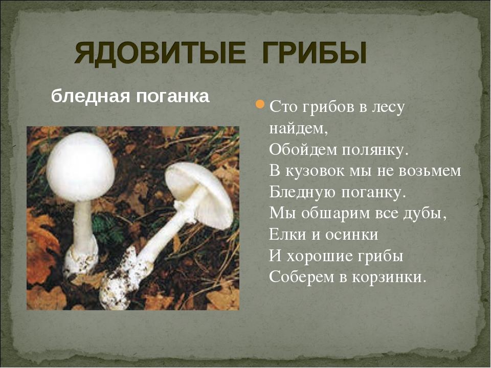 бледная поганка Сто грибов в лесу найдем, Обойдем полянку. В кузовок мы не во...