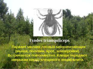 Ixodes trianquliceps Паразит мелких лесных млекопитающих (мыши, полевки, крот