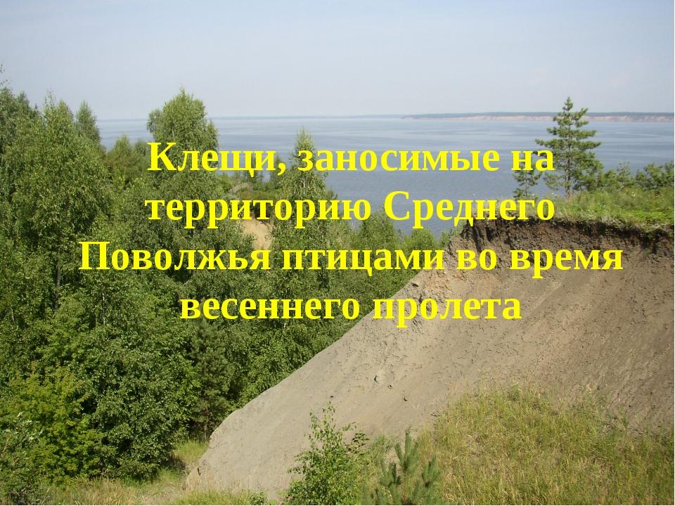 Клещи, заносимые на территорию Среднего Поволжья птицами во время весеннего п...