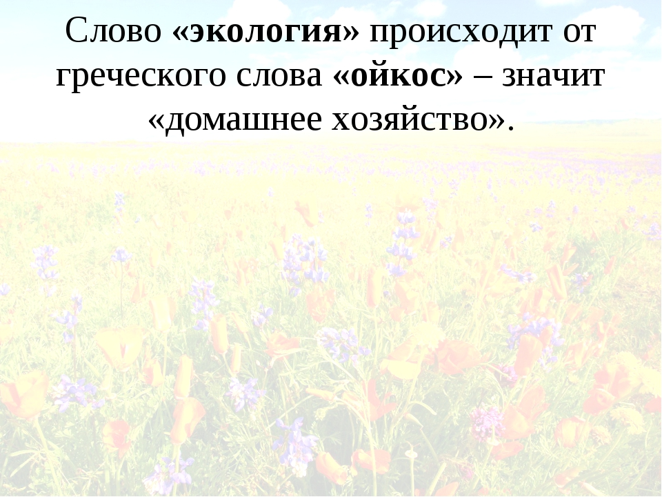 Слово «экология» происходит от греческого слова «ойкос» – значит «домашнее хо...