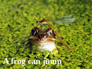 A frog can jump