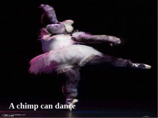 A chimp can dance