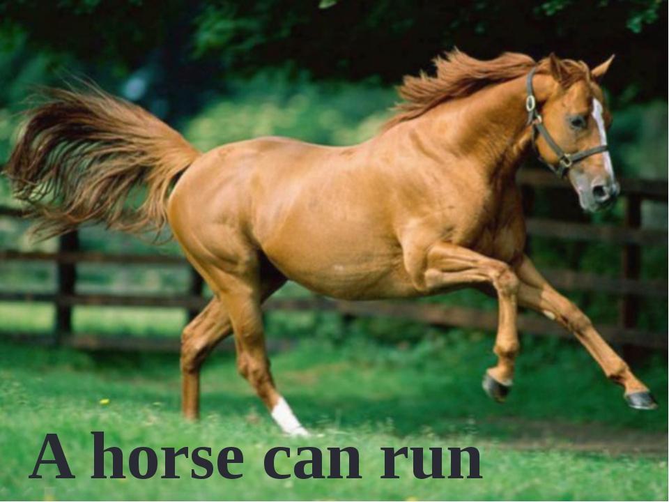 A horse can run