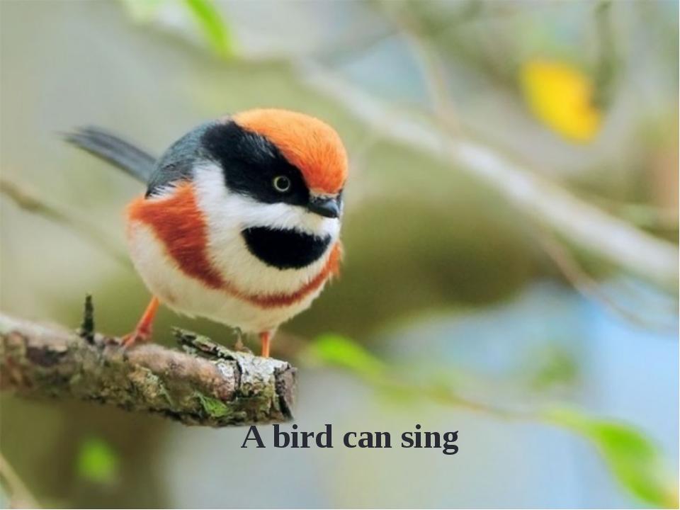 A bird can sing