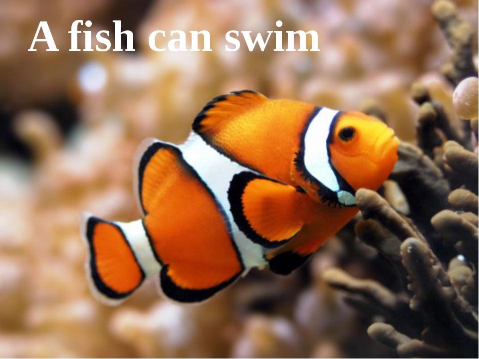 A fish can swim
