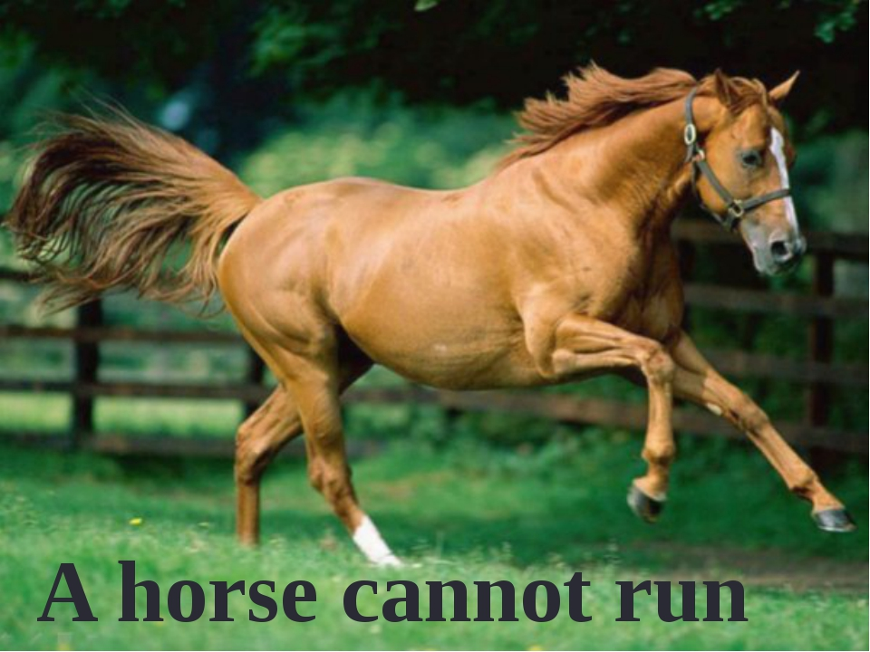 A horse cannot run