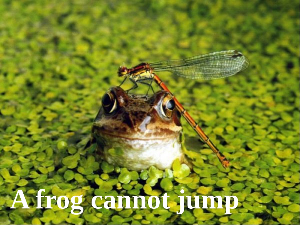 A frog cannot jump