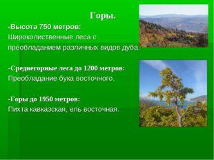 Горы. -Высота 750 метров: Широколиственные леса с преобладанием различных ви
