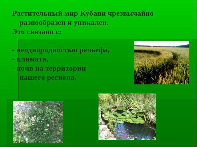 Растительный мир Кубани чрезвычайно разнообразен и уникален. Это связано с: -...