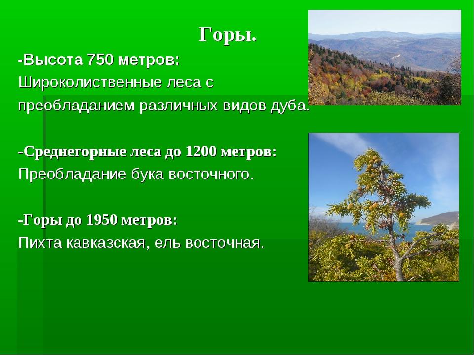 Горы. -Высота 750 метров: Широколиственные леса с преобладанием различных ви...