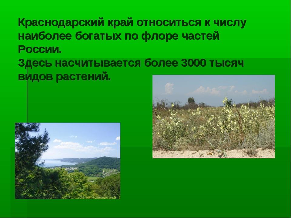 Краснодарский край относиться к числу наиболее богатых по флоре частей России...