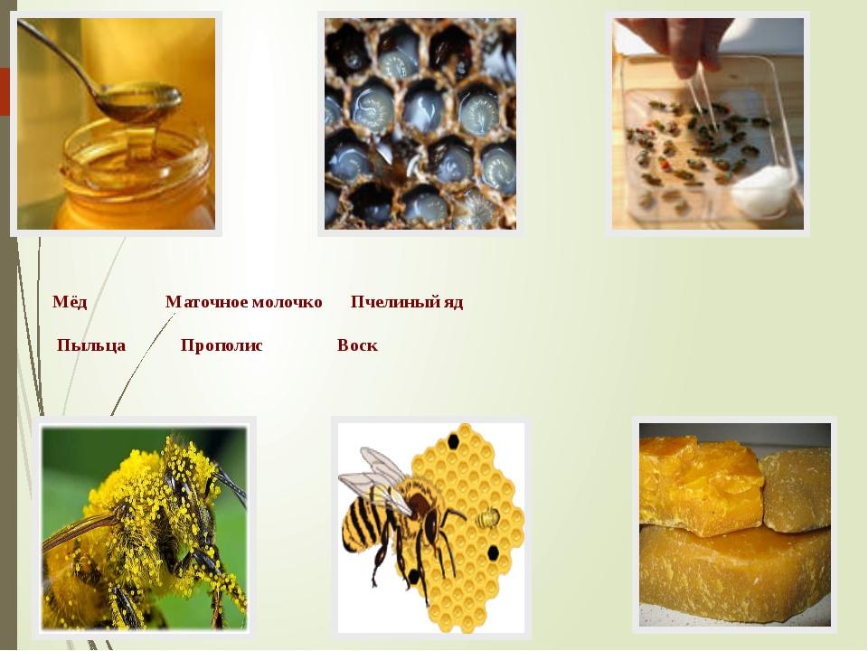 Мёд Маточное молочко Пчелиный яд Пыльца Прополис Воск