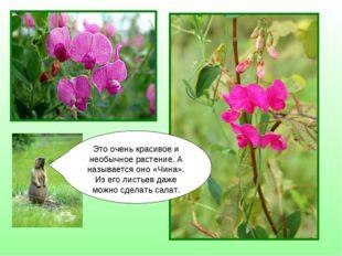 Это очень красивое и необычное растение. А называется оно «Чина». Из его лист