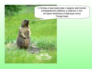 А теперь я расскажу вам о редких растениях Азнакаевского района, а именно о т