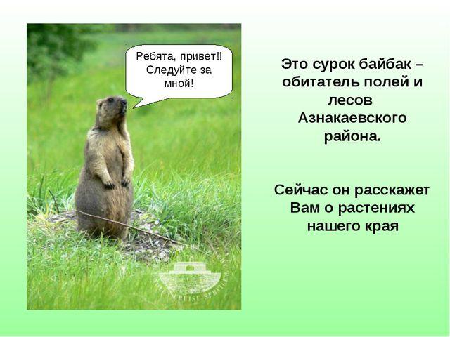 Это сурок байбак – обитатель полей и лесов Азнакаевского района. Сейчас он ра...