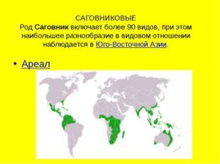 САГОВНИКОВЫЕ РодСаговниквключает более 90 видов, при этом наибольшее разноо