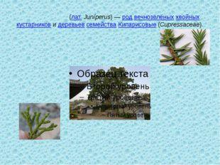 Можжеве́льник(лат.Juníperus)—родвечнозелёныххвойныхкустарниковидерев