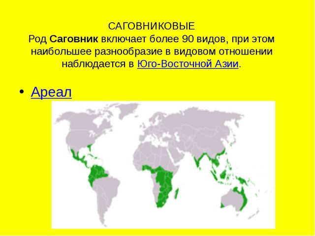 САГОВНИКОВЫЕ РодСаговниквключает более 90 видов, при этом наибольшее разноо...
