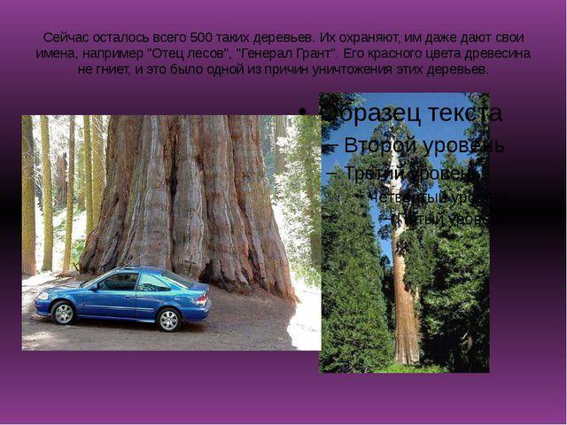 Сейчас осталось всего 500 таких деревьев. Их охраняют, им даже дают свои имен...