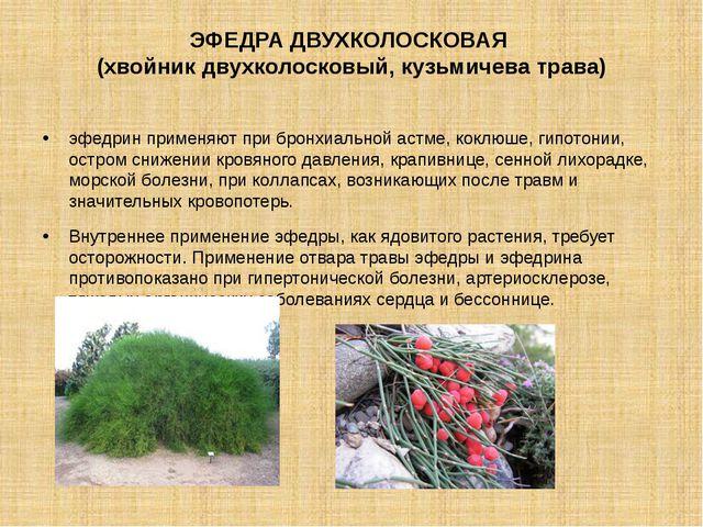 ЭФЕДРА ДВУХКОЛОСКОВАЯ (хвойник двухколосковый, кузьмичева трава) эфедрин прим...