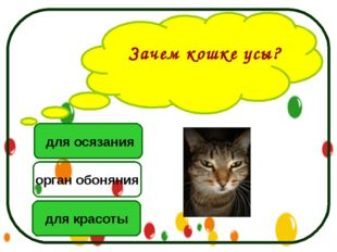 Зачем кошке усы? для осязания для красоты орган обоняния