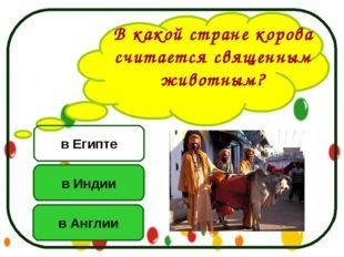 В какой стране корова считается священным животным? в Индии в Англии в Египте