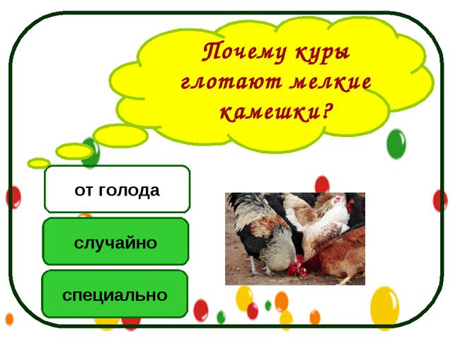 Почему куры глотают мелкие камешки? специально случайно от голода