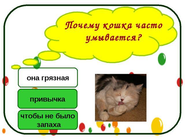 Почему кошка часто умывается? чтобы не было запаха привычка она грязная
