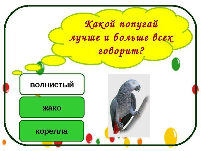 Какой попугай лучше и больше всех говорит? жако корелла волнистый