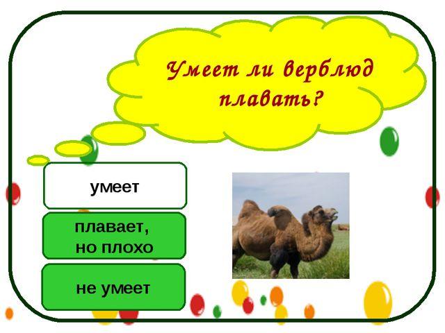 Умеет ли верблюд плавать? не умеет плавает, но плохо умеет