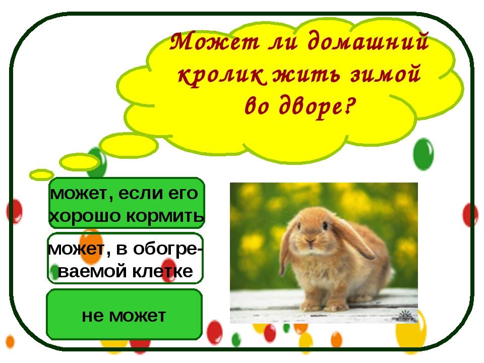 Может ли домашний кролик жить зимой во дворе? может, если его хорошо кормить...