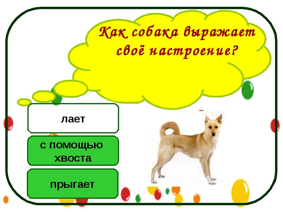 Как собака выражает своё настроение? с помощью хвоста прыгает лает