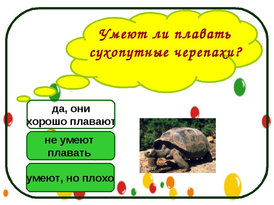 Умеют ли плавать сухопутные черепахи? не умеют плавать умеют, но плохо да, он...