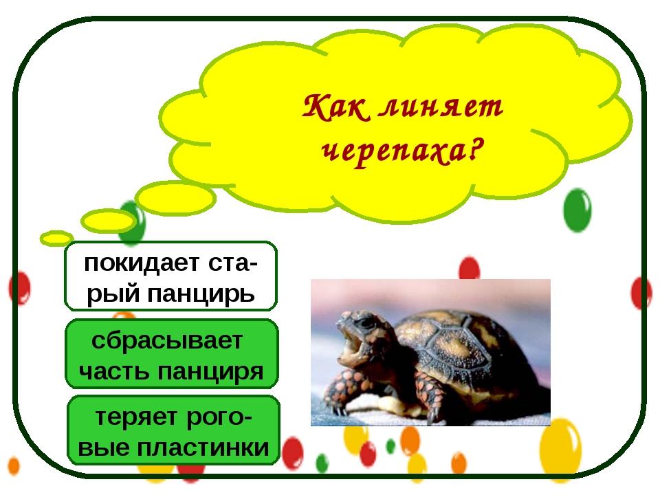 Как линяет черепаха? теряет рого- вые пластинки сбрасывает часть панциря поки...