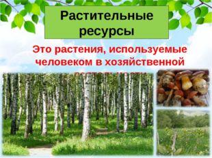 Растительные ресурсы Это растения, используемые человеком в хозяйственной де