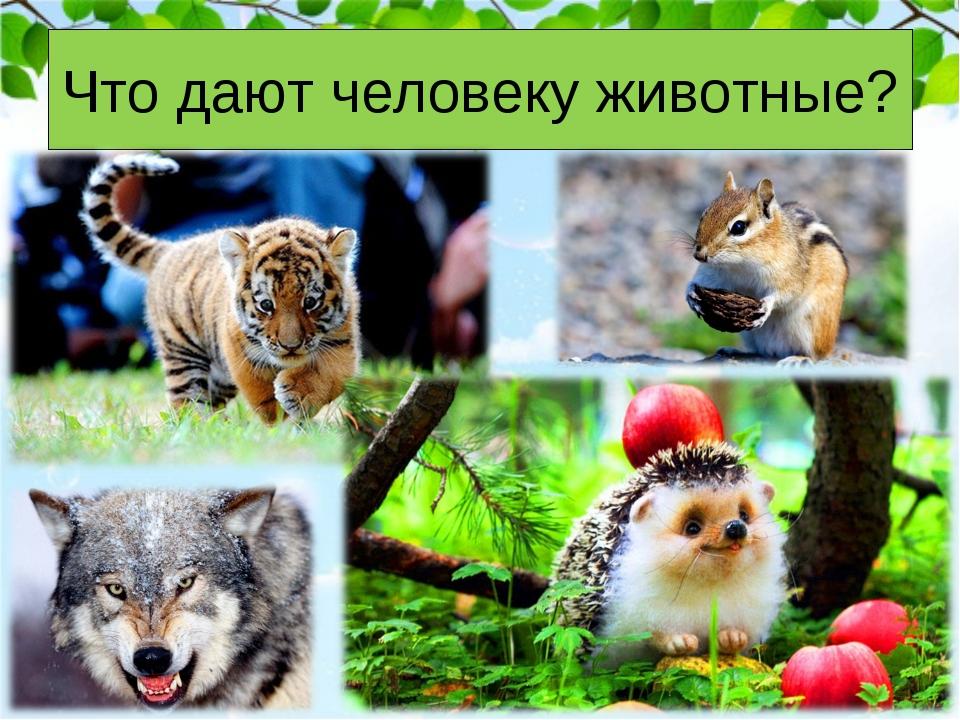 Что дают человеку животные?