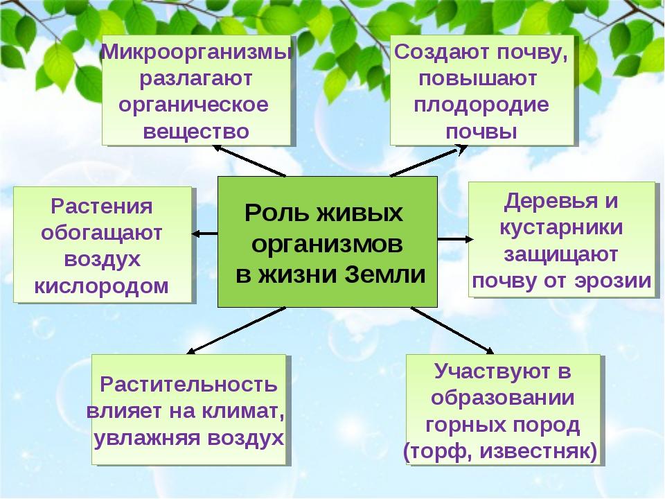 Роль живых организмов в жизни Земли Создают почву, повышают плодородие почвы...
